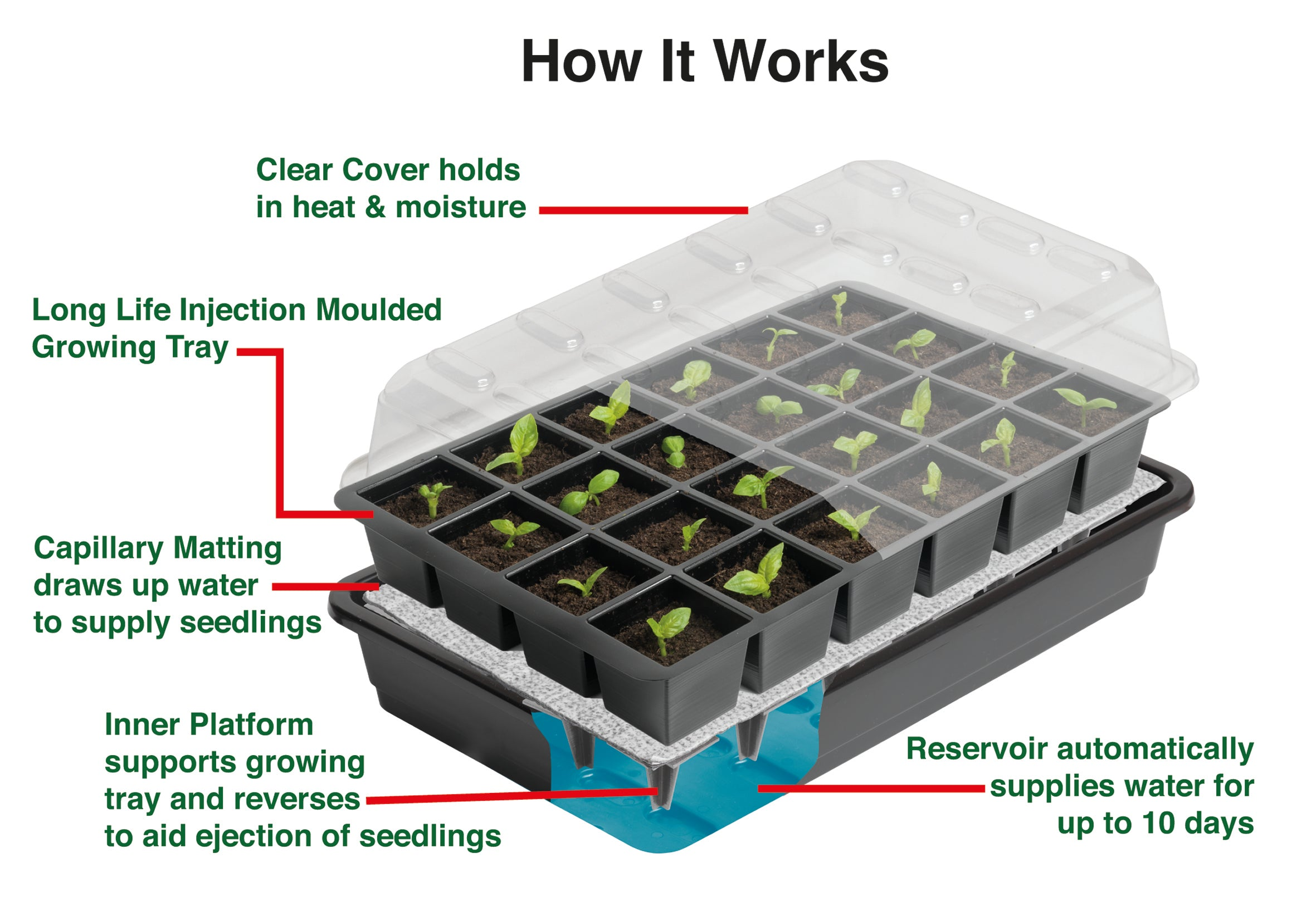 24 Cell Self Watering Seed Tray - Dibleys
