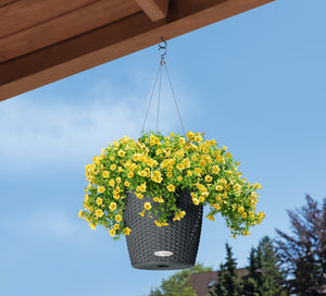 Self-watering Lechuza Medium Hanging Basket - Dibleys