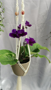 GIFT - Flowering Plant with Macrame Hanger