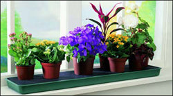 Self-watering Windowsill Plant Tray - Dibleys