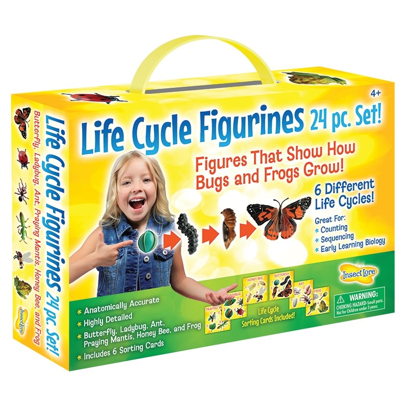 Life Cycle Figurines 24 pc Set