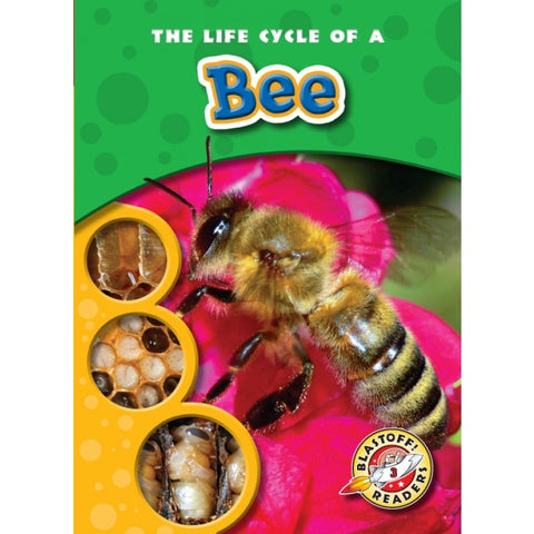 The Life Cycle of a Bee Book