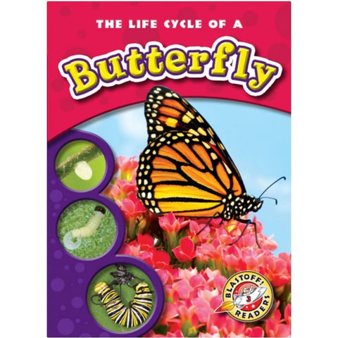 The Life Cycle of a Butterfly Bundle
