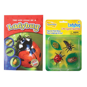 The Life Cycle of A Ladybug Bundle