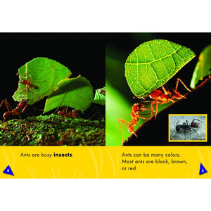 World of Insects: Ant Bundle