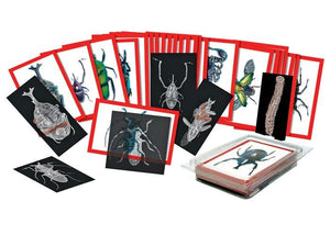 Roylco® Insect X-Rays & Picture Cards