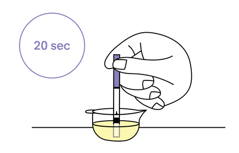 Unwrap one test, and hold by the purple handle. Dip the test into the cup of urine for 20 seconds. Do not get urine above the max line!