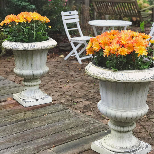 Bronze mums in urns