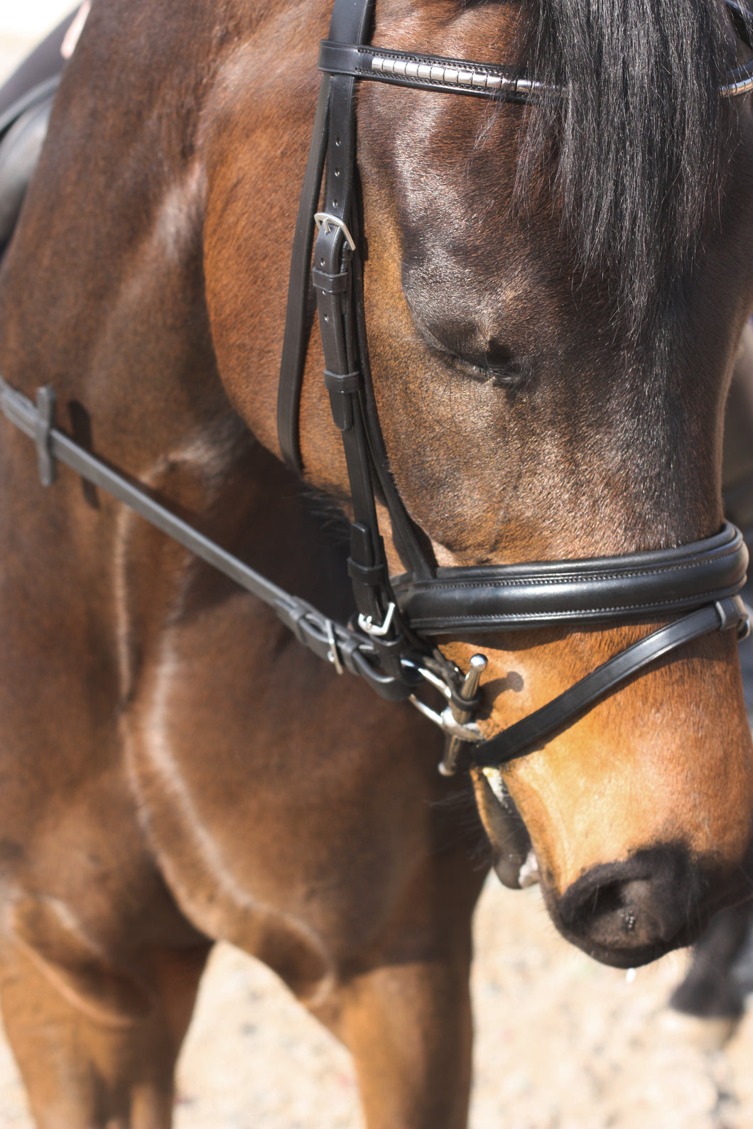 Passier Juno Snaffle Bridle | Equestrian Serenity