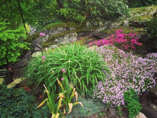 Discount plants flowering and flourishing in gorgeous garden