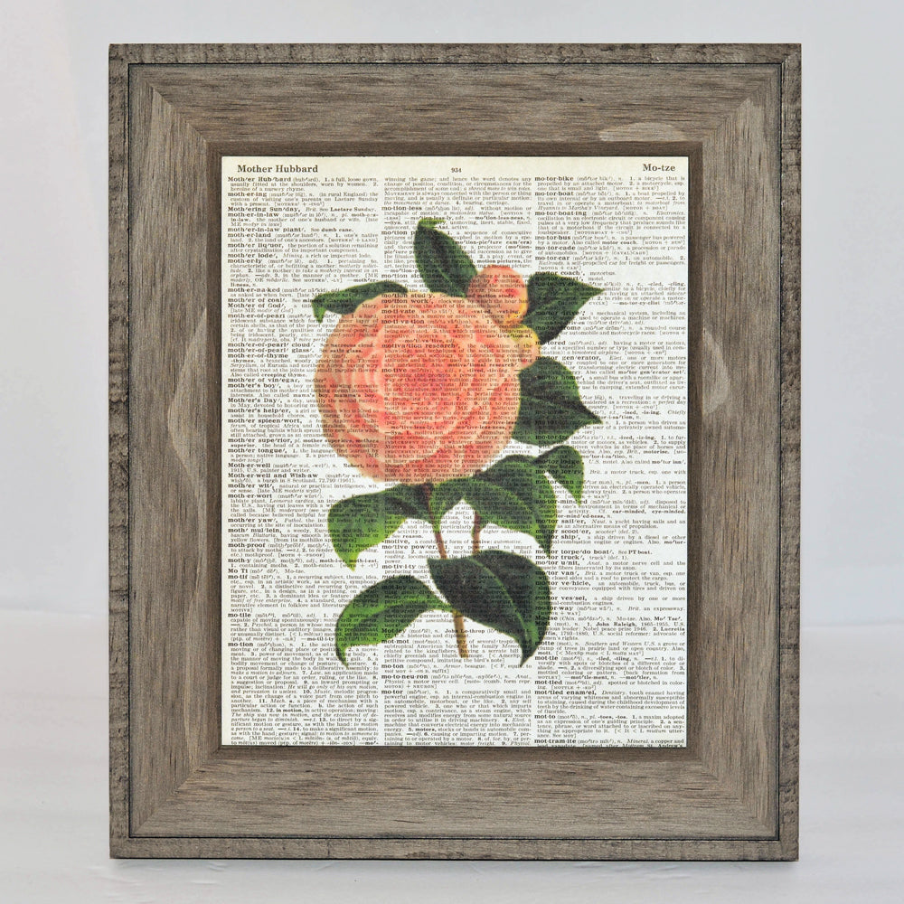 camellia art print on vintage book page, original