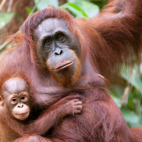 Donate To The Borneo Nature Foundation