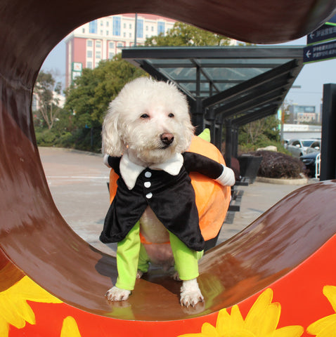 Hot Pet Dog Pumpkin Halloween Costume