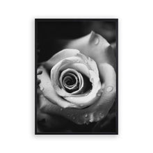 Load image into Gallery viewer, Rose B&W Print - Blim & Blum