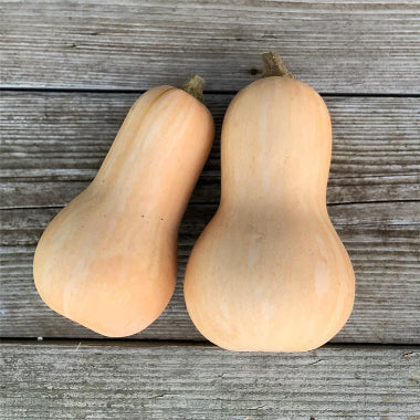 Courge Earlybutternut