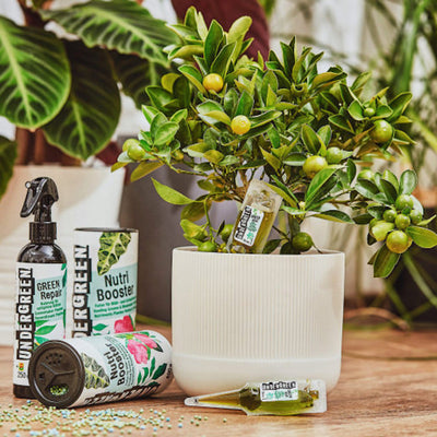 "DOSES REVITALISANTES PLANTES VERTES ""GREEN SHOT"" - UNDERGREEN-ALMA Grown in town"
