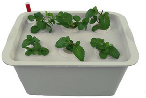 Hydroponic Grow Boxes: Step-by-Step Guide