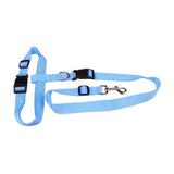 Pet dog leash running