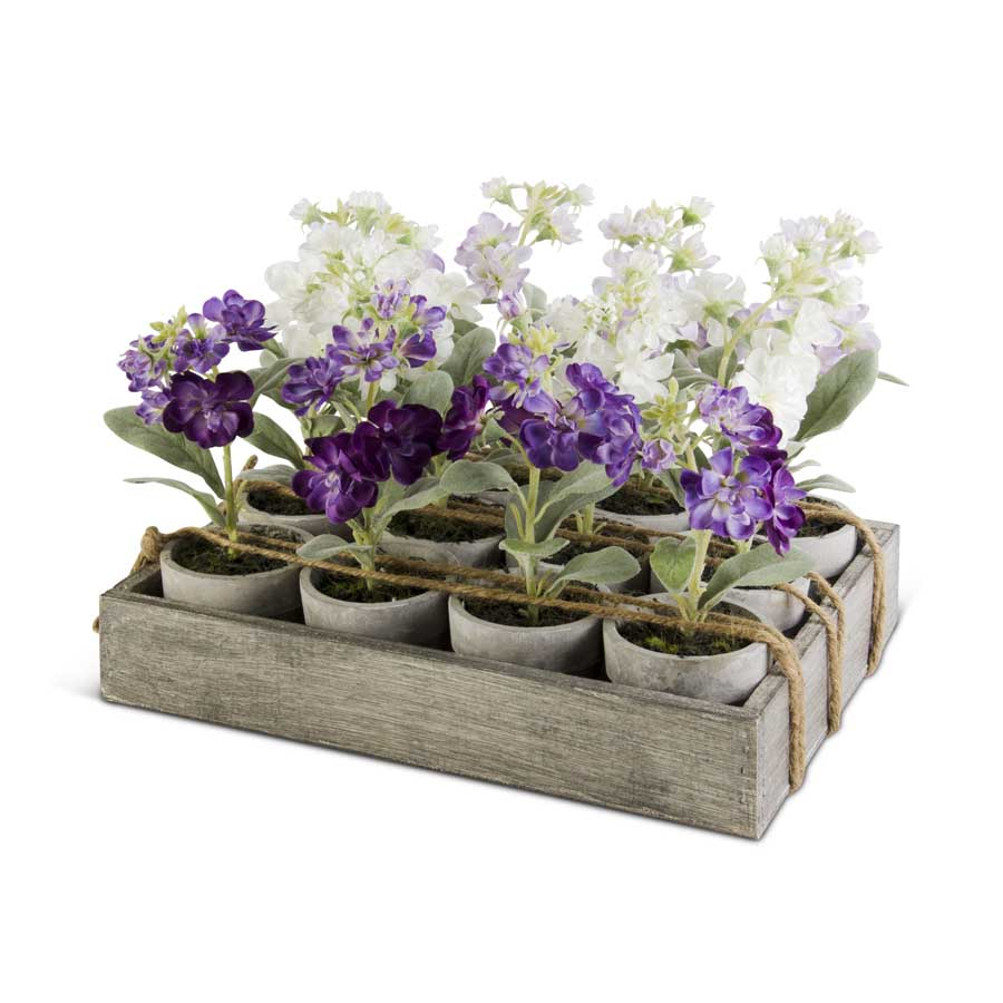 Potted Delphiniums