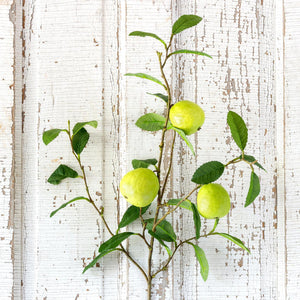 Quince Fruit Branch