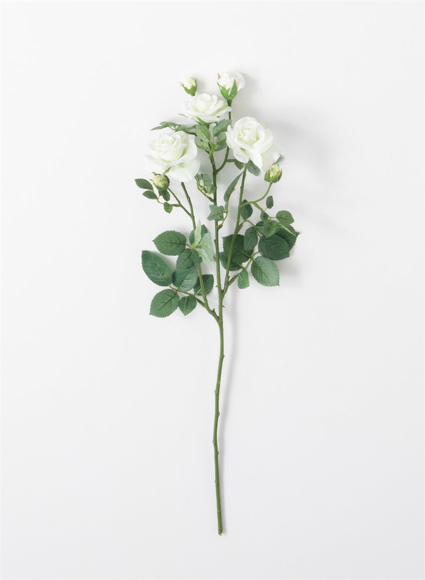White Garden Rose Stem