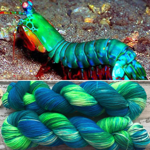 Mothy and the squid - Peacock mantis shrimp