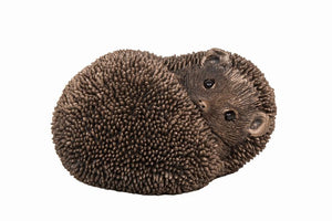 Spike Hedgehog resting by Thomas Meadows