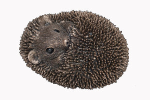 Zippo Baby Hedgehog Asleep by Thomas Meadows