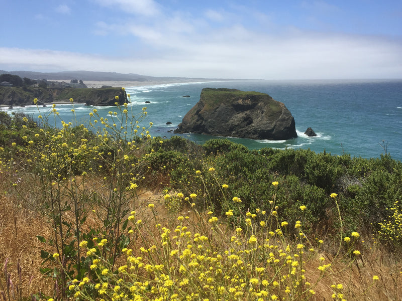 Highway One on the Mendocino Coast