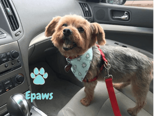 Epaws Dog Car Seat belt Harness tether Seatbelt doggie seat belt