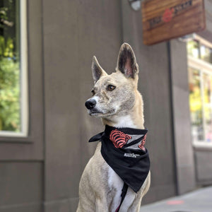Salt & Straw Bandana
