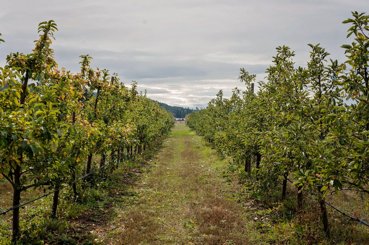 Finnriver Farm & Cidery apple orchard