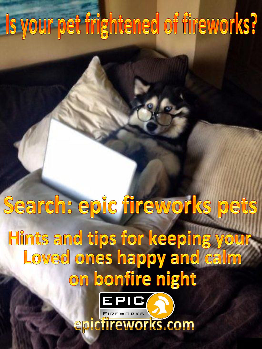 Protect pets from fireworks: RSPCA