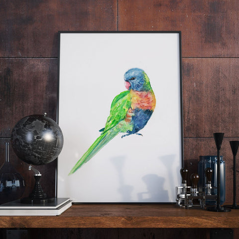 Lorikeet - Unique Watercolour Illustration -  Australian Birds Series  - Wall Art Print - Poster