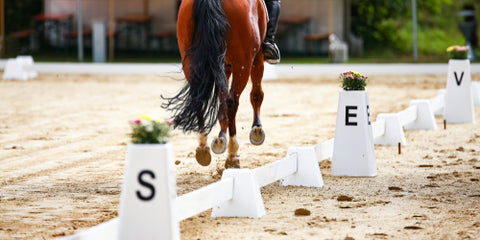 Horse Dressage horse in the dressage quadrangle