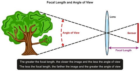 tree in front of lens and sensor for photography and physics science education