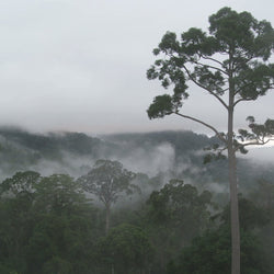 Carbon and Water Cycles in the Tropical Rainforest