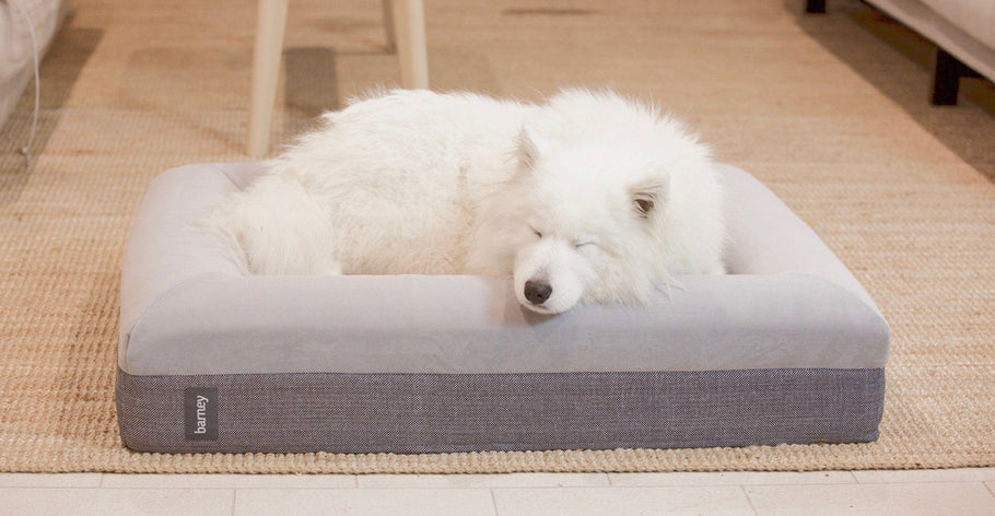 The search for the best dog bed