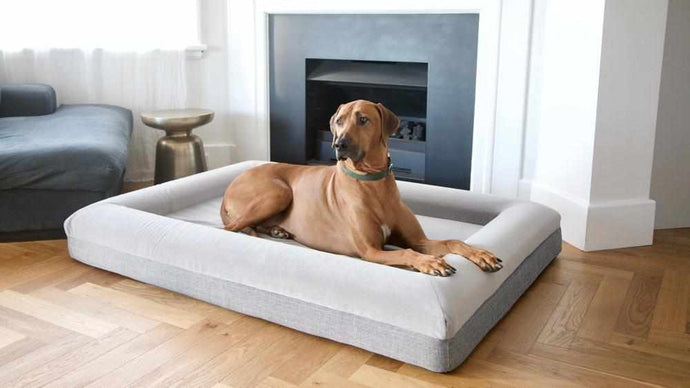 Extra Large Barney Bed (XL) Dog Bed Barney Bed
