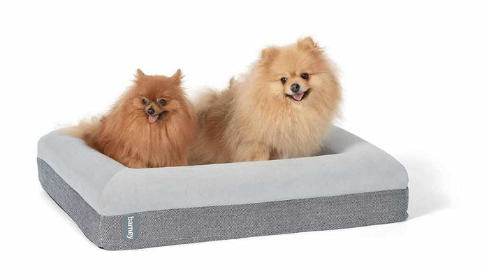 Small Barney Bed (S) Dog Bed Barney Bed