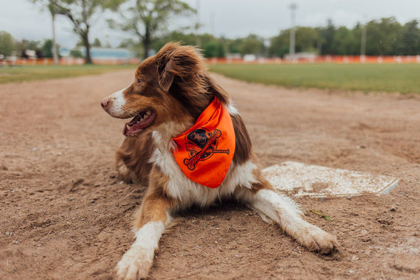 Baseball in the Mutt Bandana