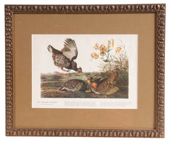 Wild Prairie Game Birds in Frame