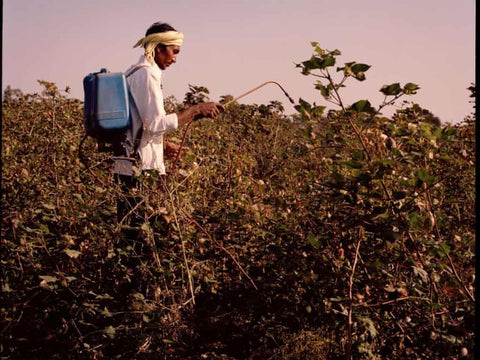 Cotton-plants-are-sprayed-with-pesticide