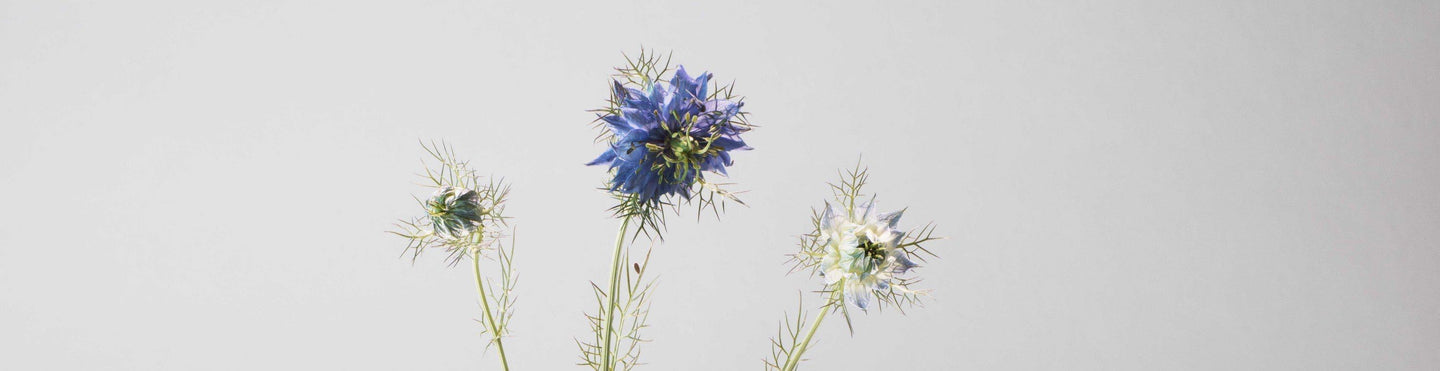 Herbarium-dried-flowers-by-bon-parfumeur