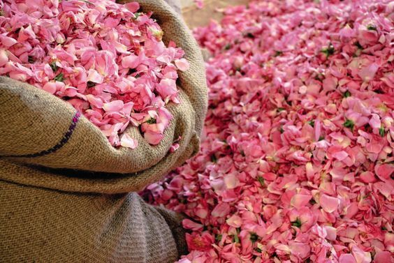 Roses petals raw materials used by bon parfumeur