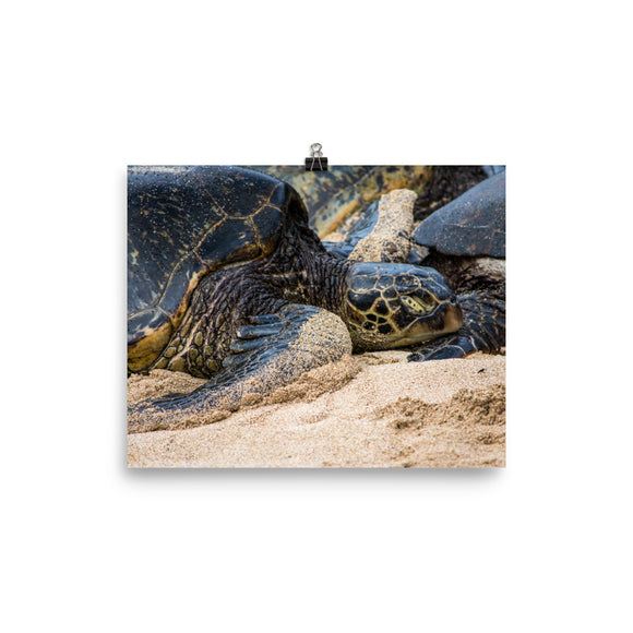 Sleepy Turtle Poster