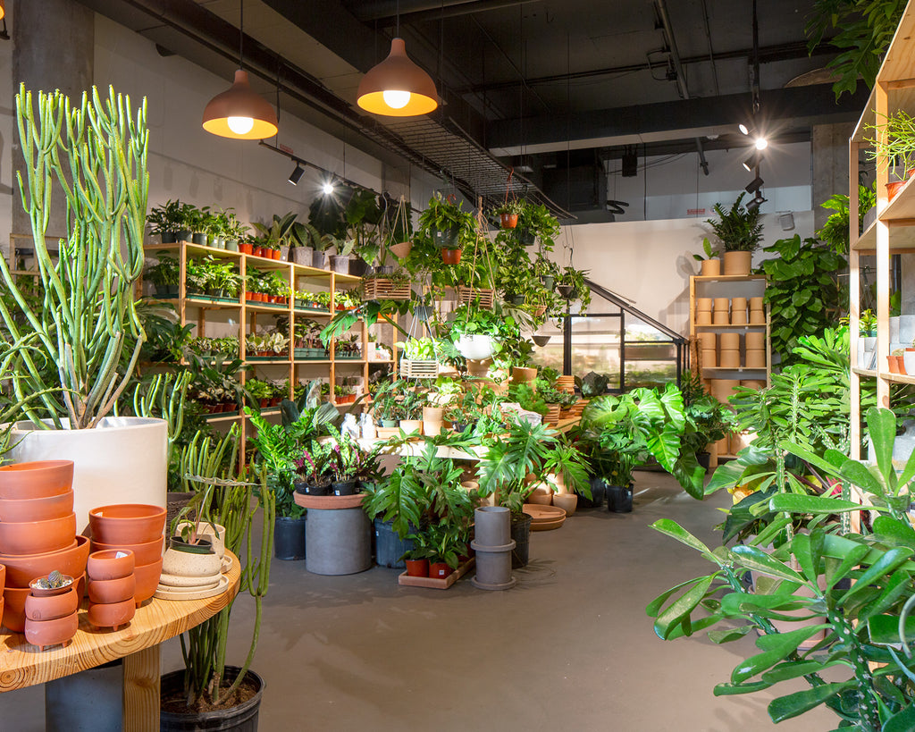The Victorian Atlanta at Ponce City Market • Cacti, Tropicals & Exotics