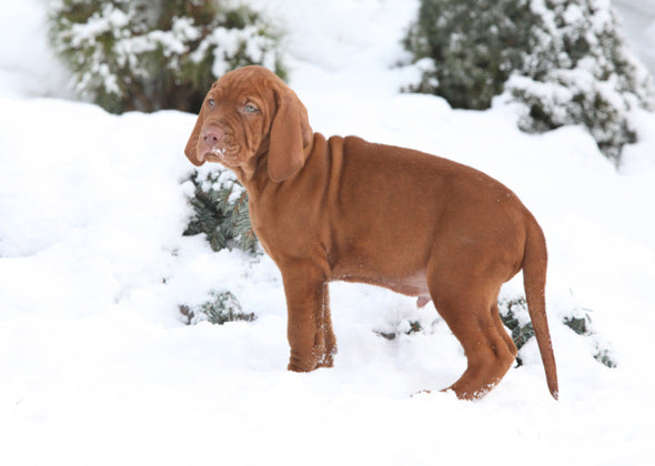 Tips to Get Your Dog to Use the Bathroom in Cold, Snowy Weather