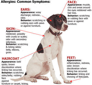 How to recognize if your dog has allergies