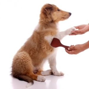 DOG SHEDDING AND WAYS TO MINIMIZE IT
